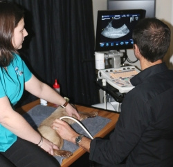 Ultrasonography in action